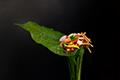 เมี่ยงคำ - miang kham - A royal leaf wrap appetizer