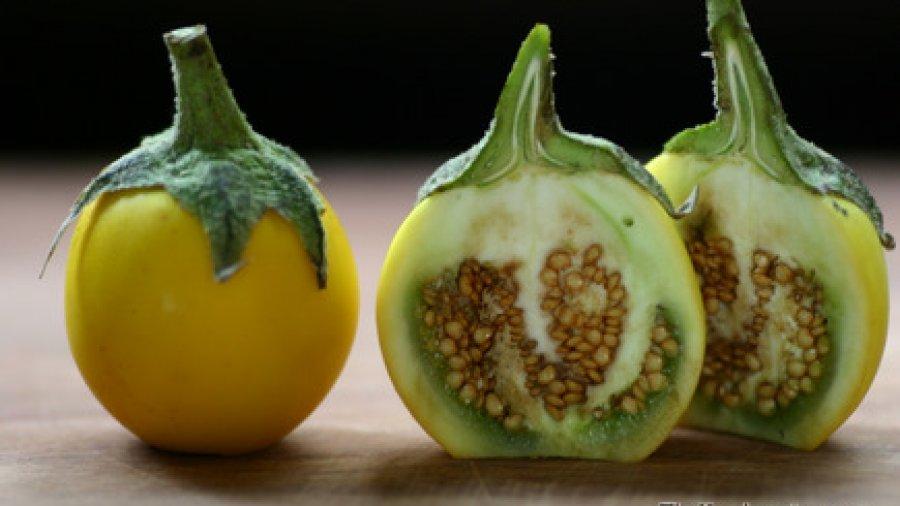 Bitter Yellow Eggplant (มะเขือขื่น ; ma kheuua khuen)
