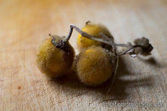 maeuk - มะอึก; Solanum ferox
