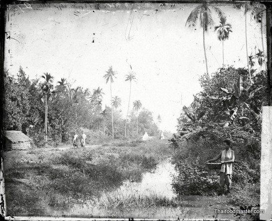 Near Bangkok, Siam, c1866