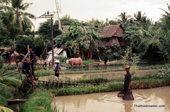 นนทบุรี   Nonthaburi ถ่ายเมื่อปีค.ศ.1969 (พ.ศ.๒๕๑๒)
