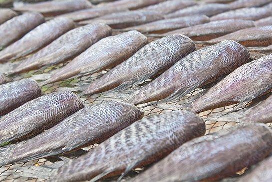 Snakeskin gourami (ปลาสลิด ; bplaa salit)
